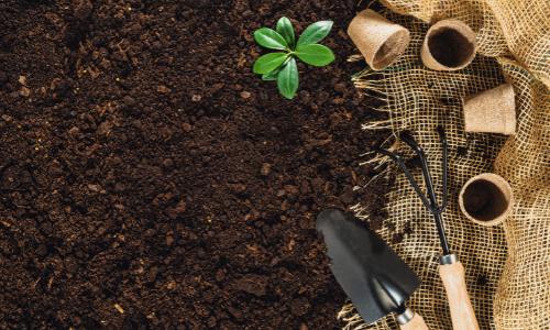 abono-o-fertilizante