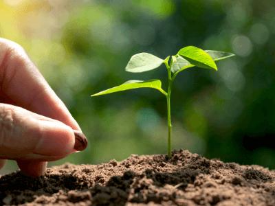 compost de lombrices para germinar semillas