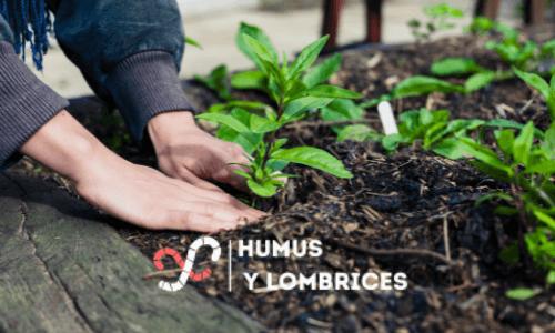 humus de lombriz para tu jardín personalizado