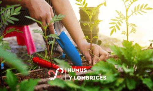suelo enriquecido con compost de lombrices