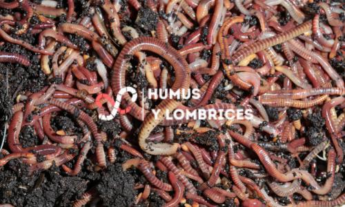 ¿Cómo mantener caliente una vermicompostera?