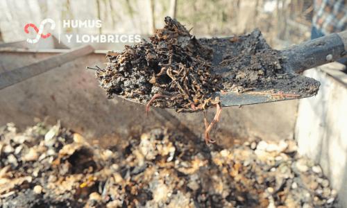 beneficios del humus de lombrices