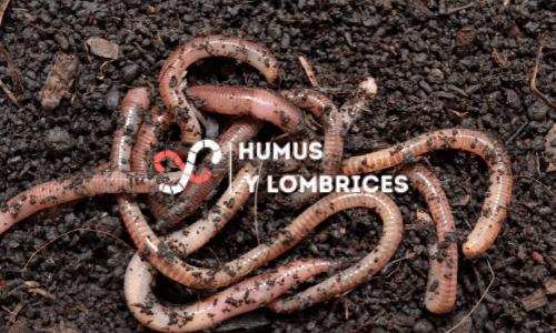 humus-de-lombriz-el-fertilizante-mas-potente