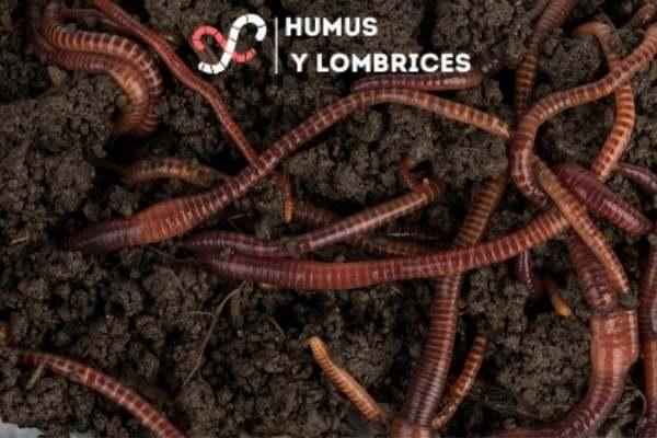Compost de lombriz