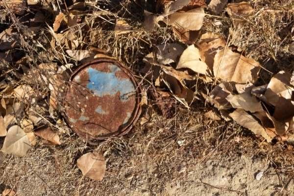 lombrices beneficiosas para el suelo contaminado